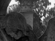 Cobweb in the sunlight, Putney Vale Cemetery