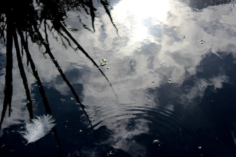 Cloud reflections in water, Greylake RSPB Reserve, Somerset