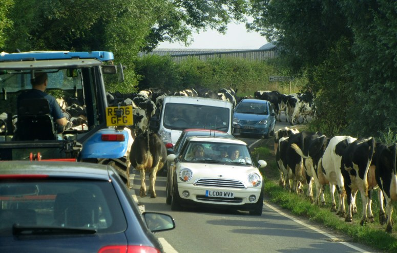 Rush Hour in the Countryside