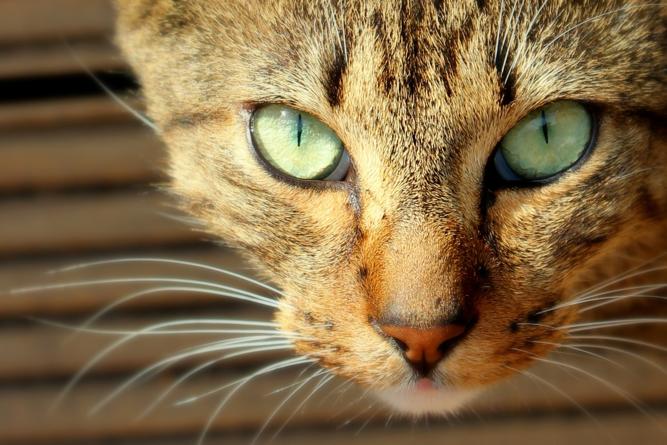 The Naming Of Cats, a poem by T S Eliot