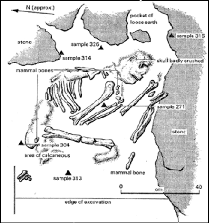 The Shanidar IV Neanderthal Flower Burial