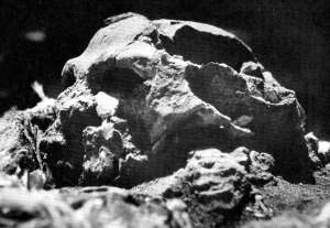 The skull of Shanidar I, known as Nandy