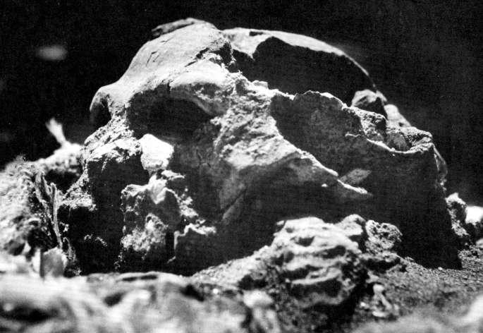 The skull of Shanidar I, known as Nandy