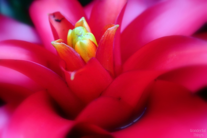 Flower at Kew Gardens