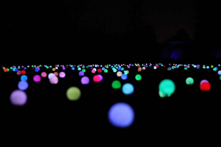 Bloom, a light installation of 1,700 swaying flowers, with each head flickering and changing colour, designed by the international group of artists Squidsoup.