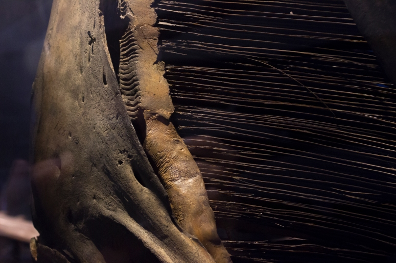 Whale baleen, Natural History Museum